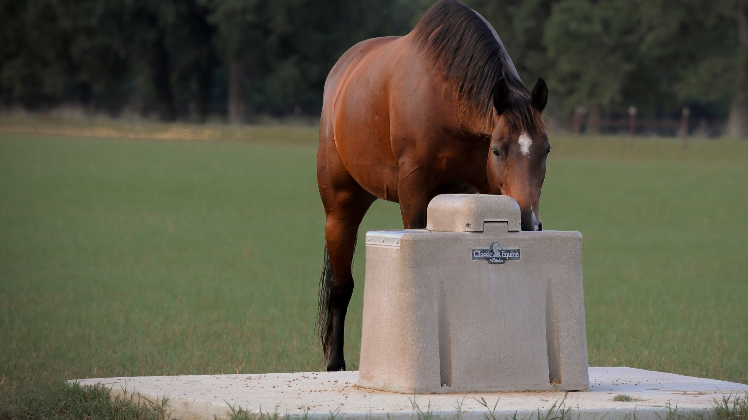 Classic Equine By Ritchie Waterers | A Fresh Idea on Watering
